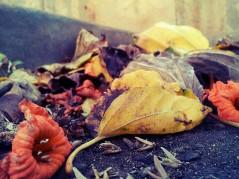 autumn_by_wren12-d7r8e4g